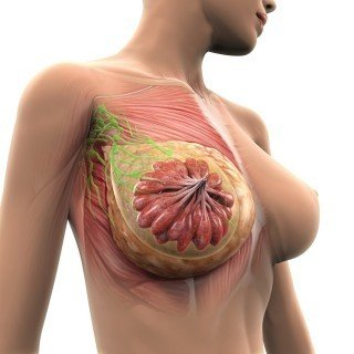 Anti-aging & breast tissue