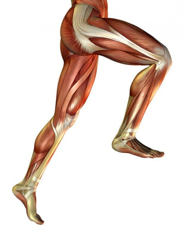 Dietary Nitrate & Leg Muscles