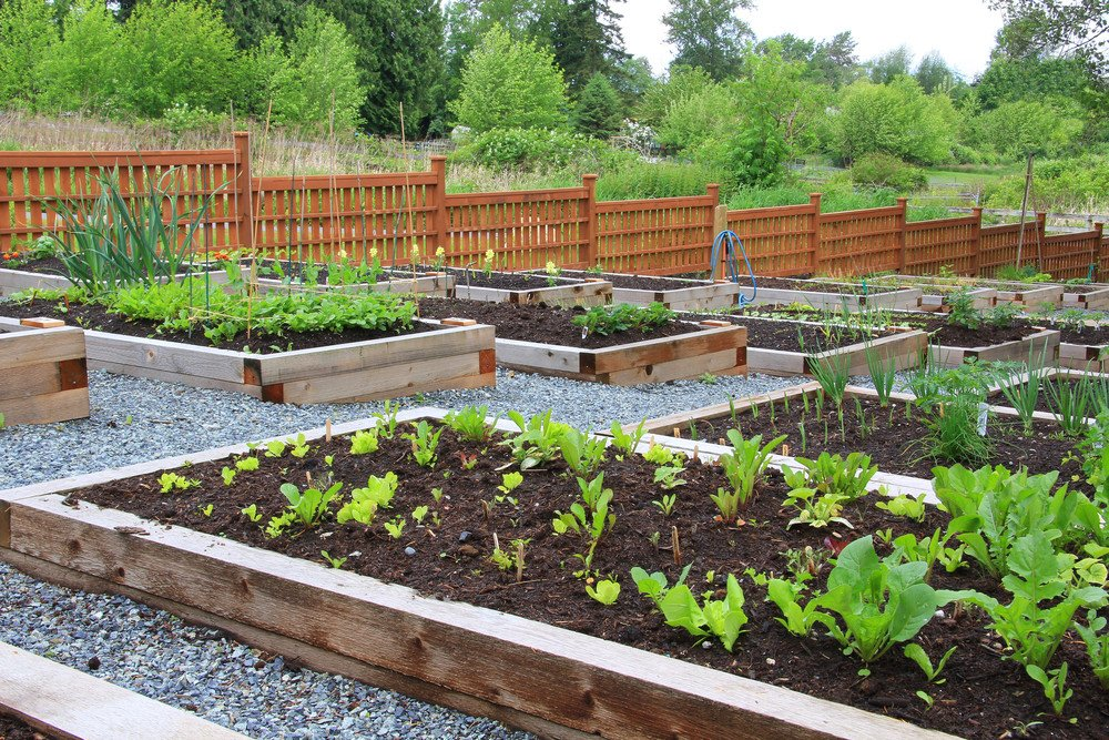 How To Grow A Food Garden Lesson No 2 Preparing Your Beds