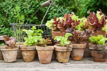 permaculture | Longevity Live