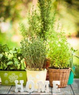 gardens | Longevity LIVE
