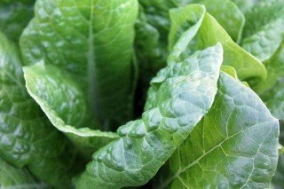 eat plant|longevity live