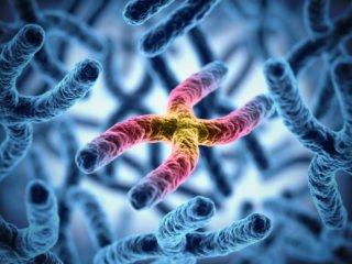 gene and immune