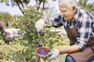 plastic and berries| Longevity Live