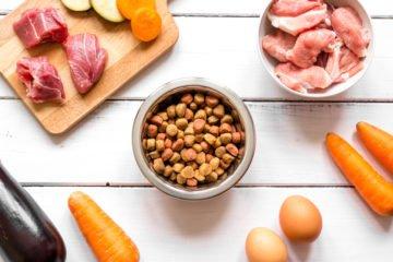 kibble vs raw food