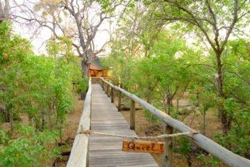 Eco-friendly Travel | Longevity LIVE