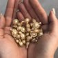 advanced ceramide capsules | Longevity LIVE