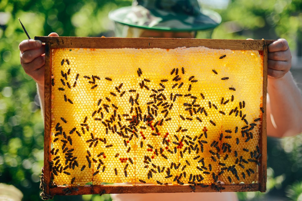 honey | Longevity Live