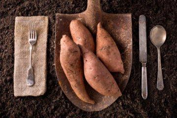 sweet potato | Longevity Live