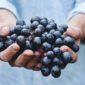 Resveratrol   Longevity LIVE