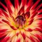 endometriosis   Longevity LIVE