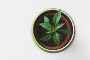 micro-greens | Longevity LIVE