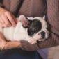 animal therapy | Longevity LIVE