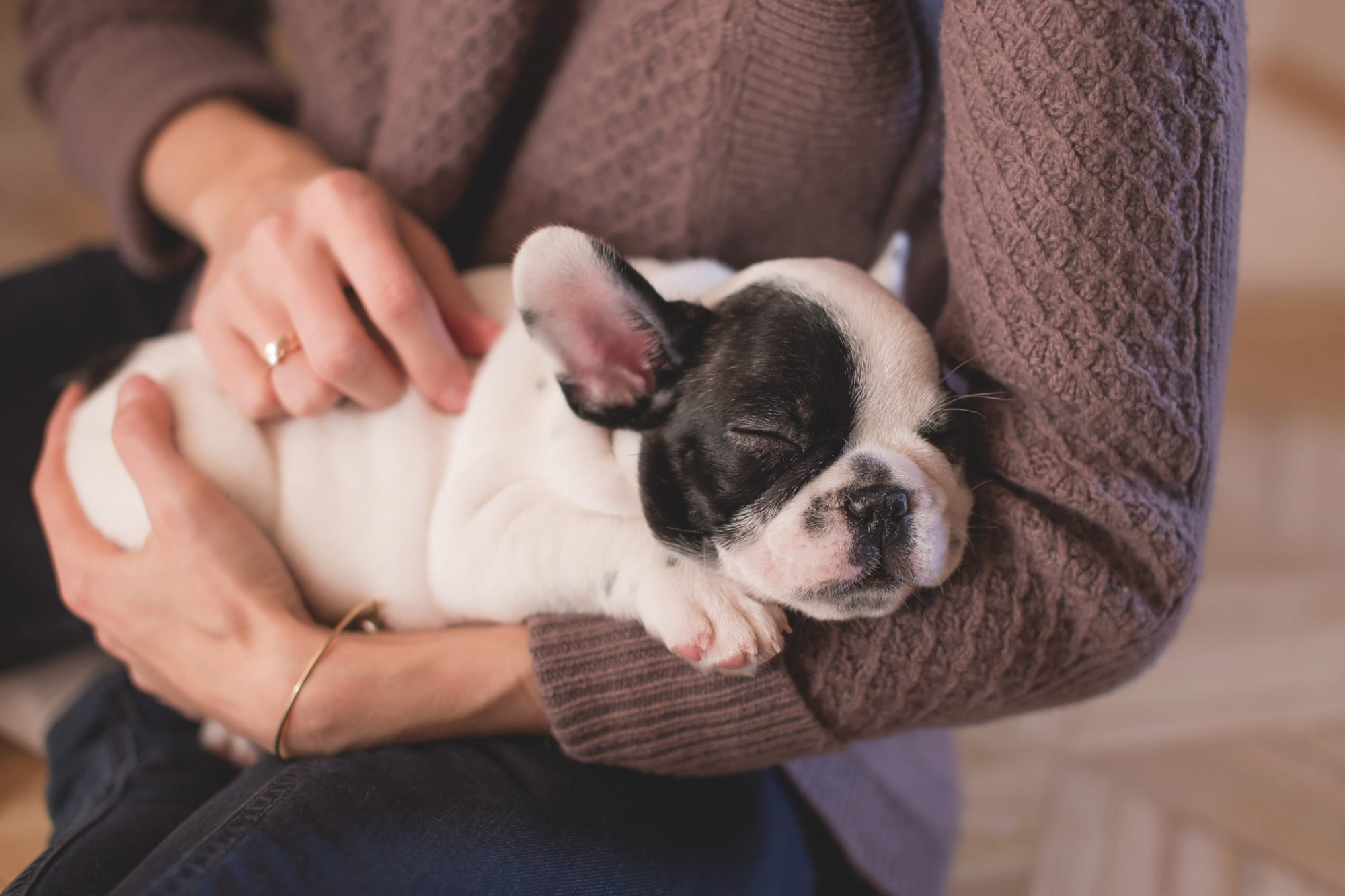 How Dogs Are Used For Animal Therapy & Why it Works