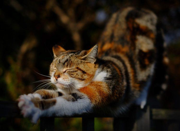 stretching | Longevity LIVE