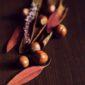 hazelnuts   Longevity LIVE