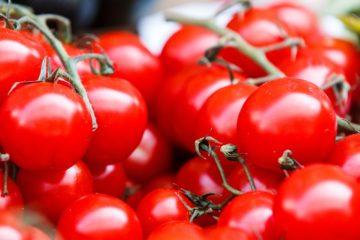 tomatoes | Longevity LIVE