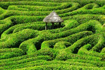 labyrinth   Longevity LIVE