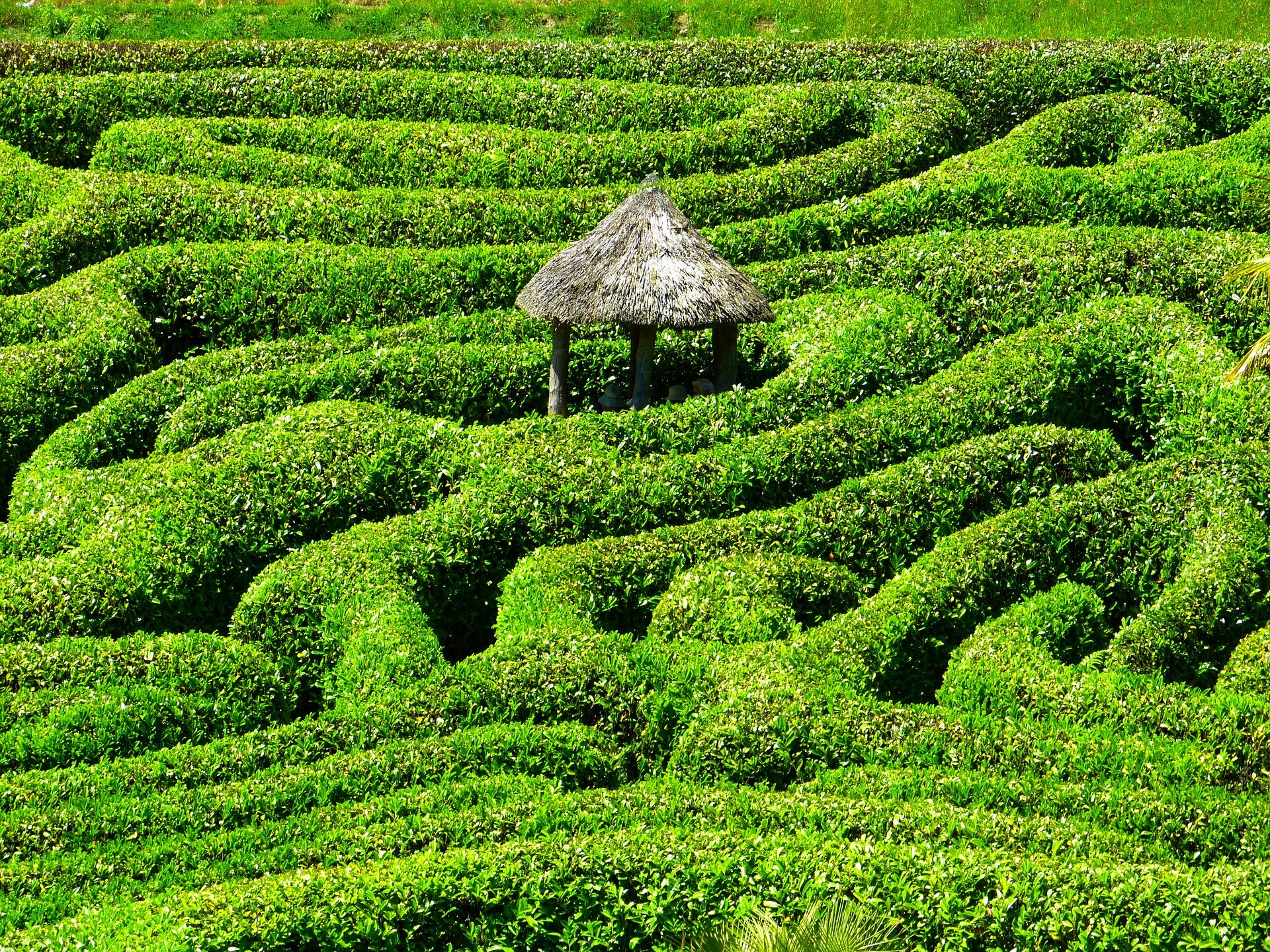 Walk To Find Your Centre In A Labyrinth Longevity Live 5 Circuit