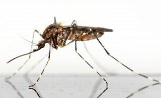 malaria | Longevity LIVE