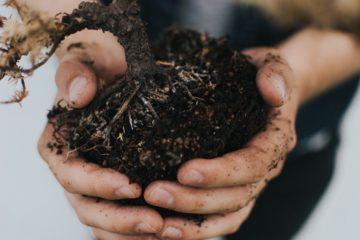 eco-friendly | Longevity LIVE
