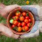 vegetables   Longevity LIVE