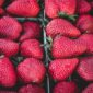 strawberries | Longevity LIVE