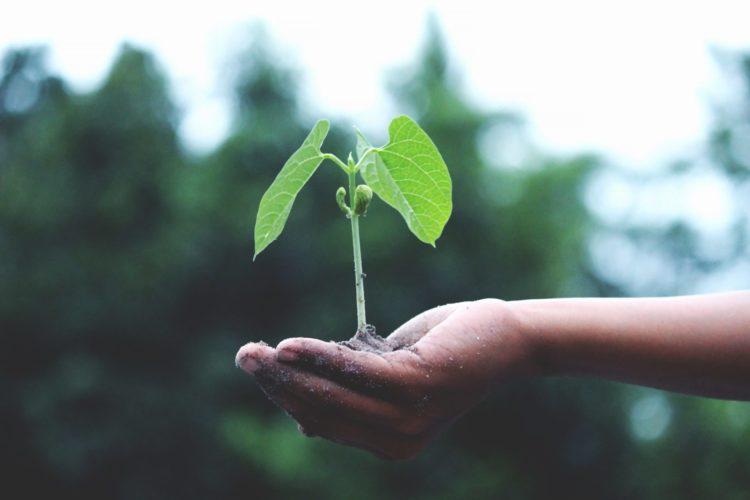 compost | Longevity LIVE