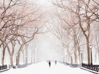 trees | Longevity LIVE