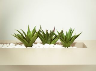 houseplants | Longevity LIVE