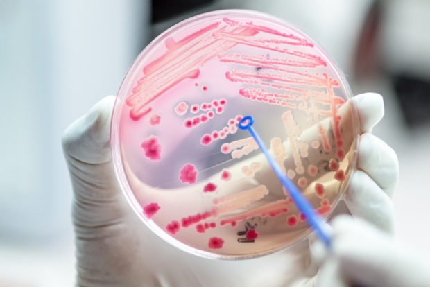 Bacteria | Longevity LIVE