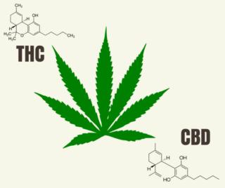 cbd vs thc anxiety