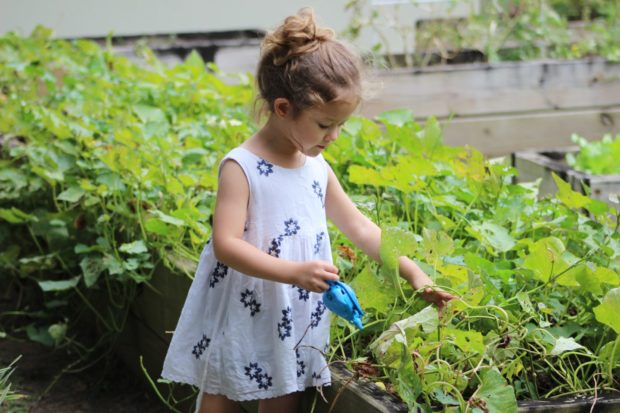 gardening | Longevity LIVE
