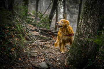 dog | Longevity LIVE