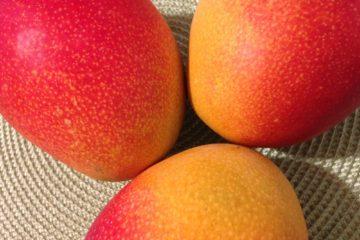mango | Longevity LIVE