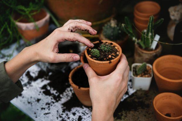 plants | Longevity LIVE