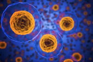 immunotherapy | Longevity LIVE