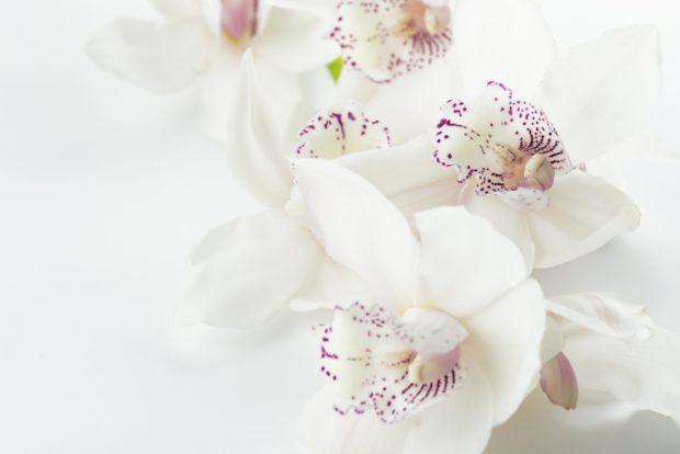 orchids | Longevity LIVE