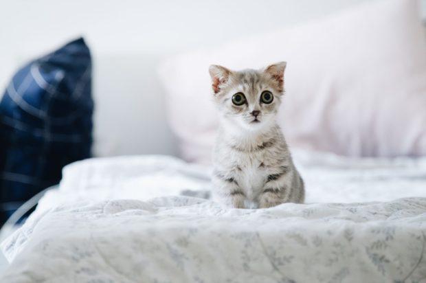 kitten | Longevity LIVE