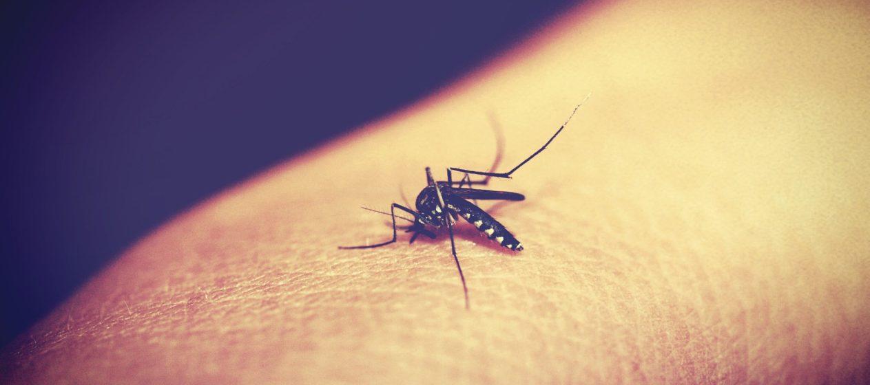 malaria   Longevity LIVE