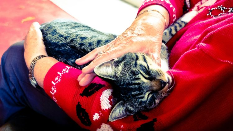 pets | Longevity LIVE