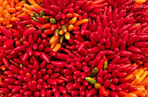 chili | Longevity LIVE