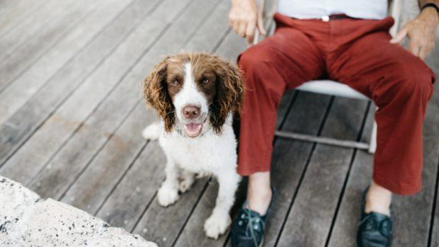 pets | Lonegvity LIVE