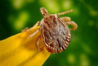ticks | Longevity LIVE
