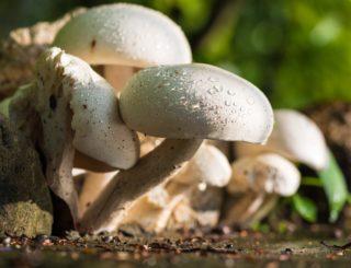 crazy mushroom [longevity live]
