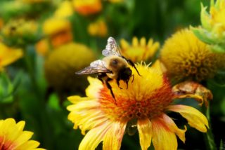 natural ways to treat seasonal allergies