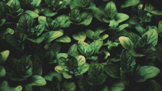 plant fall [longevity live]