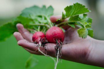 gardening [longevity live]