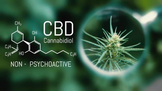 CBD |  Longevidade AO VIVO