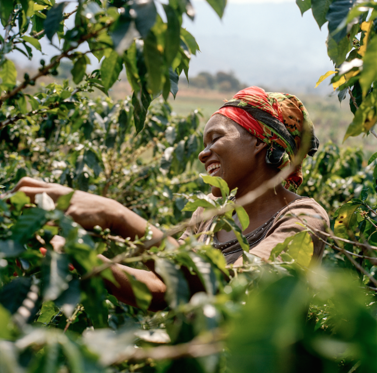 African coffee | Longevity LIVE